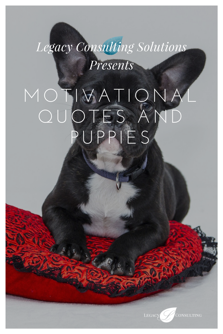 LegConSol Presents: Motivational Quotes and Puppies eBook